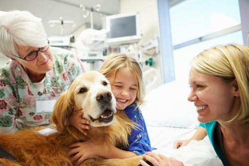 What Are the Training Requirements and Location Restrictions for Therapy Dogs?