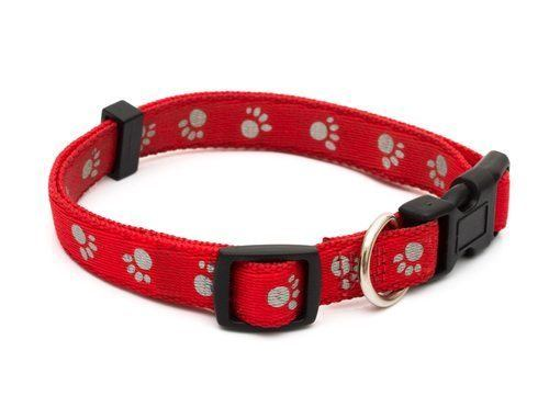 Why Does ATD Restrict the Types of Dog Collars Used?