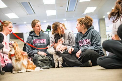 Why Dog Therapy Should be on Your Summer Bucket List