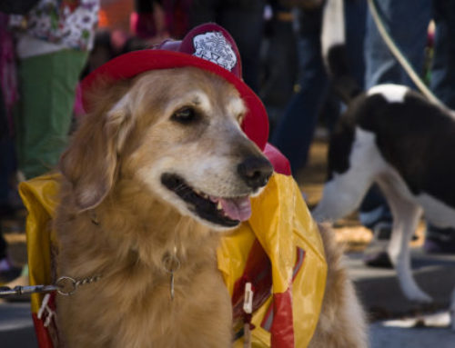 Relieving the Rescuers: Therapy Dogs and Firefighters